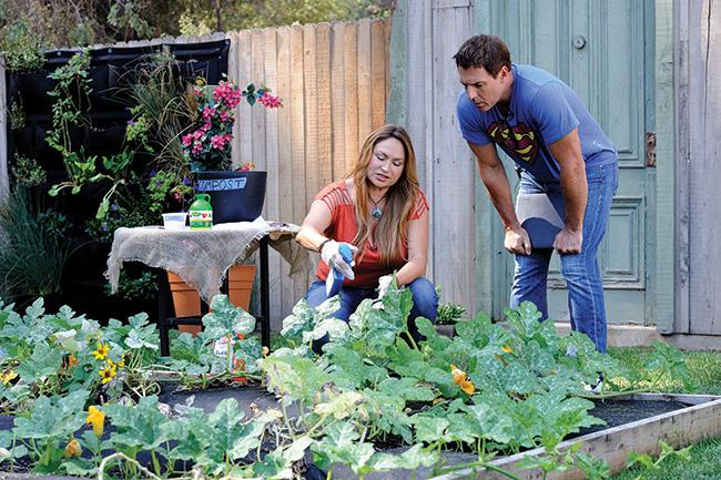 Mark Steines garden
